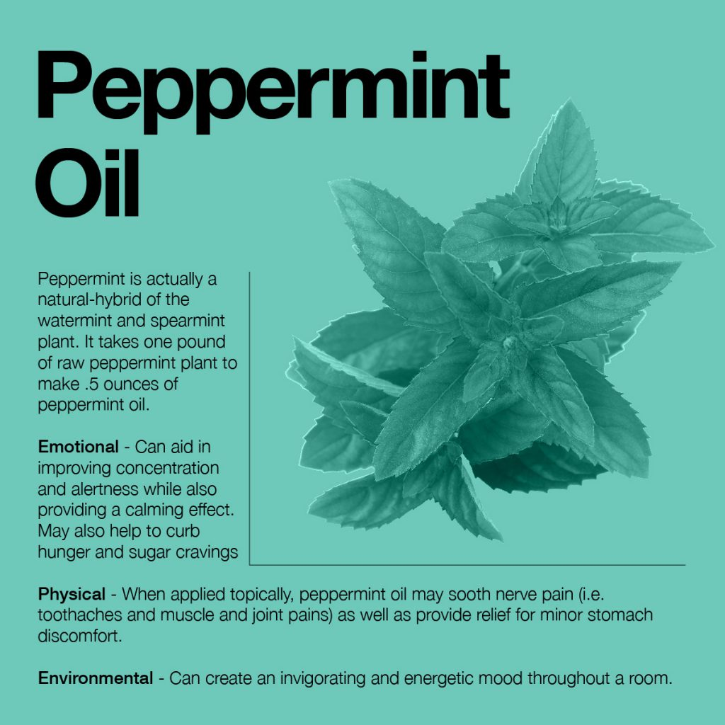 information about peppermint oil