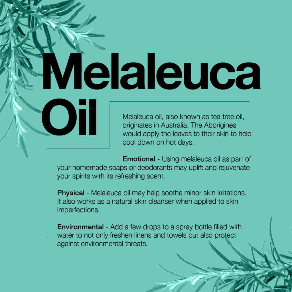 information about melaleuca oil